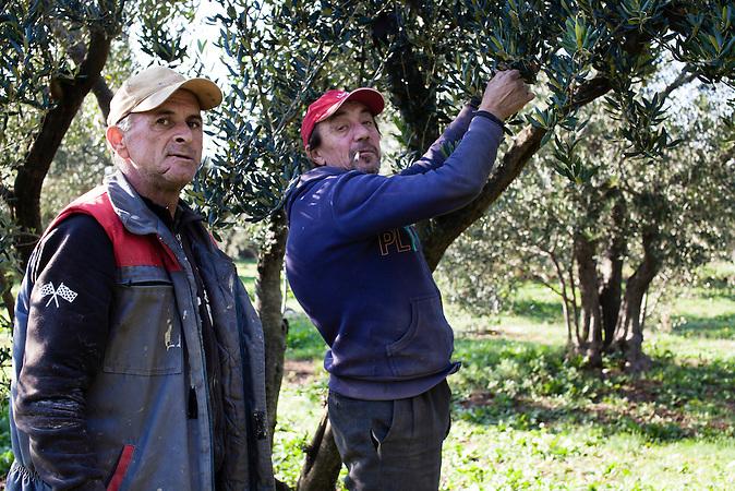 Nikola (l.) und Hussein (r.) pfl&uuml;cken Oliven auf dem Campingplatz von Toni Bačić  in Neum, Bosnien. Beide arbeiten dort als Tagel&ouml;hner, um ihr Leben zu finanzieren. Nach einem Tauchunfall musste Nikola seinen Job als Schiffsmaschinist aufgeben. Nikola ist Christ, Hussein ist Moslem. Beide sind gut befreundet. / Nikola (l.) and Hussein (r.) are picking up Olives at the campingsite of Toni Bačić  in Neum, Bosnia. Both are working there on a daily basis to make a living in Neum. After a diving accident, Nikola was forced to give up his former job as a maritime mechanic (maschinist). Nikola is catholic, while Hussein is muslim. Both are good friends.<br />Der kleine Ort Neum liegt in Bosnien-Herzegovina und bildet den einzigen Zugang zum Meer des Balkanlandes. Auf einer L&auml;nge von 9 km durchschneidet der Ort das kroatische Staatsgebiet (Neum-Korridor) Seit dem EU-Beitritt Kroatiens ist Neum auf beiden Seiten von EU-Au&szlig;engrenzen eingeschlossen. / The small city of Neum in Bosnia and Herzegovina is the only place in Bosnia, where the country has access to the adriatic sea. Over a length of 9 kilometers the area cuts Croatian territory in two pieces. Since Croatia became part of the European Union, the city of Neum is enclosed between two EU-boarders.