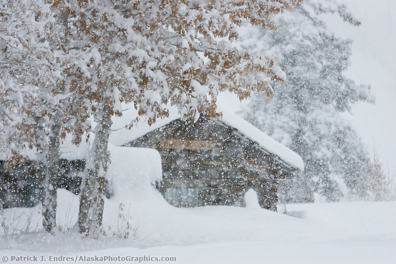Historic log cabin in heavy falling snow, Wiseman, Alaska