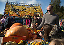 27/10/14<br /> <br /> Eight-month-old Elsa Steele , dressed as a pumpkin, chooses her Halloween squash with mum and Dad, Katie and Graham Steele.<br /> <br /> <br /> Families enjoying the half term sunshine flock to buy their pumpkins for Halloween from a cottage-garden in Slindon, near Chichester West Sussex. This year a backdrop made entirely from pumpkins and squashes depicts a scene from the Battle of Britain marking 75 years since the Spitfire came into service. It shows two Spitfires in D Day colours (white stripes on the wings) flying over the spire of Chichester Cathedral and also an RAF roundel.<br /> <br /> All Rights Reserved - F Stop Press.  www.fstoppress.com. Tel: +44 (0)1335 300098