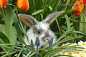 Kim, EASTER, OSTERN, PASCUA, photos+++++,GBJBWP41620,#e#