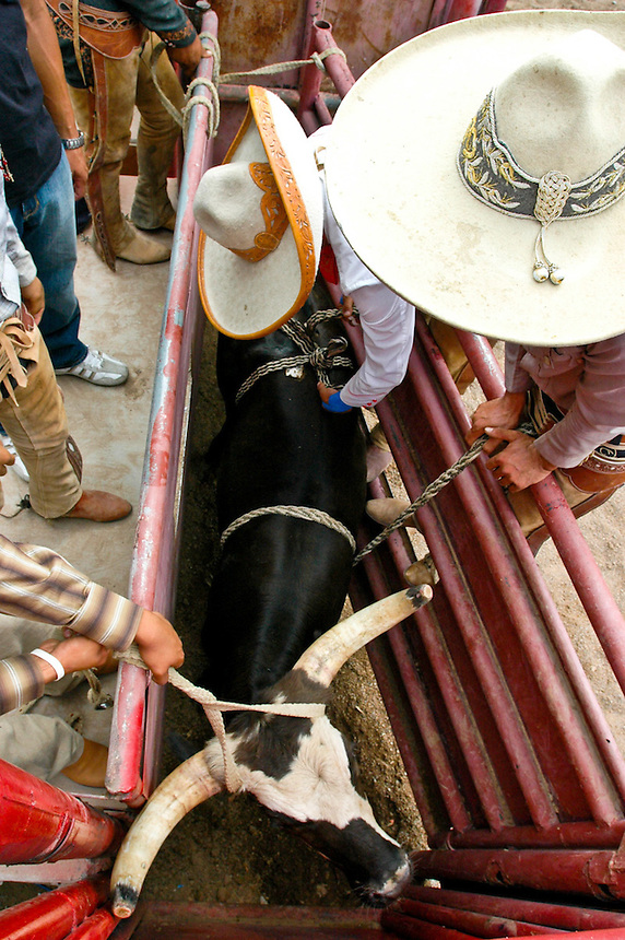 AJ ALEXANDER/AAP - Corona rodeo  09/01/07 Charro's prepairing a bull for the next contestant at the Corona Ranch in Laveen, AZ on Saturday Sept. 01, 2007  Photo by AJ Alexander/phx.jpg.
