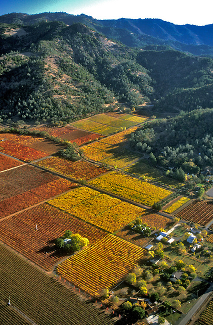 Fall Napa Valley vineyard near Calistoga