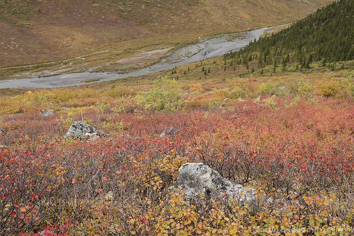 Fall color on the tundra above Savage River, Denali National Park, Alaska