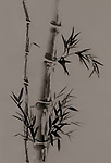 Bamboo stalk with leaves Japanese Zen painting Sumi-e, oriental black ink on rice paper artistic organic design on natural brown background