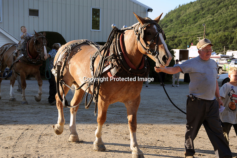 Draft horse and driver coming out of the arena at Cheshire Fair in Swanzey, New Hampshire USA