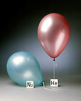 HELIUM &amp; NITROGEN FILLED BALLOONS (1 of 5)<br /> The Two Balloons Filled To The Same Volume<br /> Although N2(g) is lighter than air, the weight of the balloon prevents it from rising.