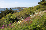 Sea view and wildflowers landscape at the end of the Roseland peninsula, Cornwall, England, UK