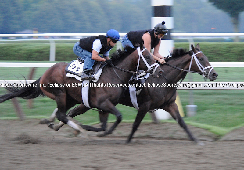 Stay Thirsty (outside), trained by Todd Pletcher, works in company and gets in his last work before an anticipated start in net Saturday's grade 1 Travers Stakes for three year olds on August 21, 2011 at Saratoga Race Track in Saratoga Springs, New York.  (Bob Mayberger/Eclipse Sportswire)