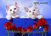 Xavier, ANIMALS, REALISTISCHE TIERE, ANIMALES REALISTICOS, cats, photos+++++,SPCHCATS911,#a#, EVERYDAY