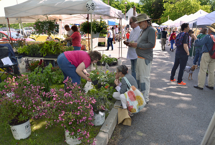 A view of the Opening Day of the 2017 Saugerties Farmer's Market on Saturday, May 27, 2017. Photo by Jim Peppler. Copyright/Jim Peppler-2017.