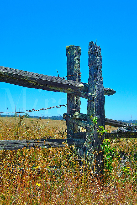 An old broken down wood and barbed wire fence stands at the edge of a field with dried grass in Occidental California.  Moss is growing on the wood.