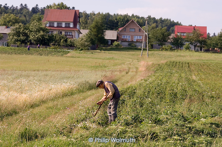 An elderly man with a scythe on farmland in south-eastern Poland