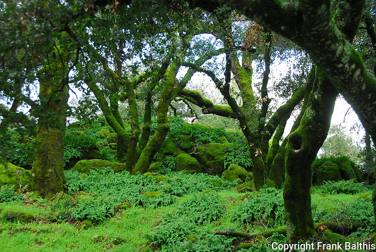 Oak woodland on Westside Rd.