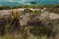 View of Ashdown Forest, Sussex, UK, May 20, 2017. Picturesque Ashdown Forest stretches across the countries of Surrey, Sussex and Kent, and is the largest open access space in the South East of England. It is famous as the geographical inspiration for the Winnie the Pooh stories and is popular with fans of the characters.