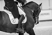 NZL-James Avery rides One Of A Kind during the first day of Dressage for the CCIO4*-L FEI Nations Cup Eventing. 2019 Military Boekelo-Enschede International Horse Trials. Thursday 10 October. Copyright Photo: Libby Law Photography.