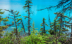 Canada, Alberta, Banff National Park, young evergreens at edge of lake, blue with glacial flour