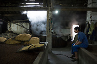 Gaomiao township, Meishan, Sichuan province, China, October 2014 - A worker prepares sorghum for distilling Gaoliang liquor at a local distillery.