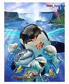 Howard, REALISTIC ANIMALS, REALISTISCHE TIERE, ANIMALES REALISTICOS, selfies,shark,killer whale,orca,turtle,niagrara falls, paintings+++++,GBHRPROV248,#a#, EVERYDAY