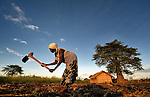 """Alefa Soloti weeds her field of sesame in Dickson, a village in southern Malawi that has been hard hit by drought in recent years, leading to chronic food insecurity, especially during the """"hunger season,"""" when farmers are waiting for the harvest."""