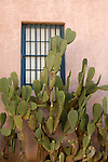 Window and cactus in the Barrio Historico, the historical section of Tucson, Arizona, dating to the 1800s
