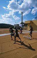 INDIA Tamil Nadu, worker dry paddy in rice mill before peeling/ INDIEN, Tamil Nadu, Arbeiter in einer Reismuehle, trocknen von Reis vor dem Schaelen