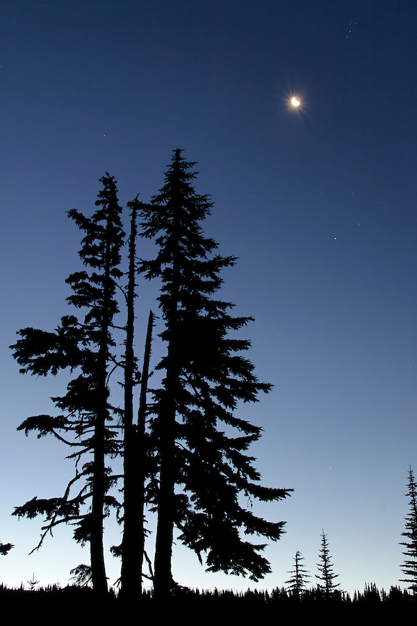 Moon and stars in deep blue sky above silhouetted subalpine fir, Mount Rainier National Park, Lewis County, Cascade Mountains, Washington, USA