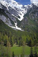Evergreen trees below snow capped mountain. Hahntennjoch pass,  Imst district, Tyrol, Tirol, Austria.