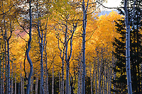 Late autum in the Wasatch Mountains, Utah.