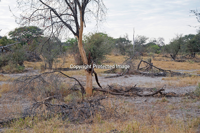 Landscape of Moremi Animal Reserve in Botswana in Africa