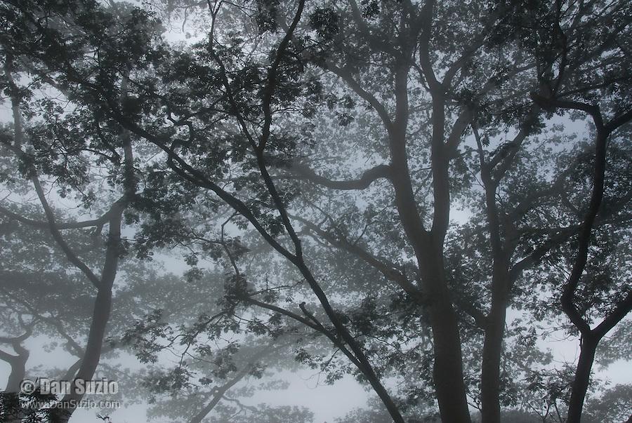 Rainforest, in the mountains southwest of Dili, Timor-Leste (East Timor)