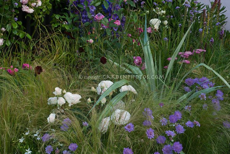 Rosa, scabiosa, ornamental grass, delphinium, Heuchera purple foliage, Buxus boxwood, pink, purple white color theme in garden bed border combination