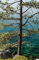 Jeffery Pine and Lake