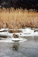 WETLANDS<br /> Winter tidal effects<br /> Iona Island, NY