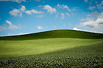Shades of green rolling hills in the summer in the Palouse Valley