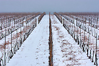 Winter view of a Niagara on the Lake vineyard