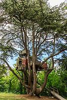 France, Indre-et-Loire, Langeais, château et jardin de langeais cabane dans un cèdre de l'Atlas (Cedrus atlantica)