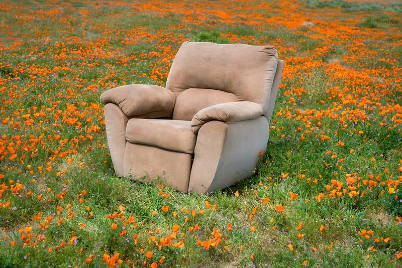 Chair in Poppy Field. Antelope Poppy preverve, California