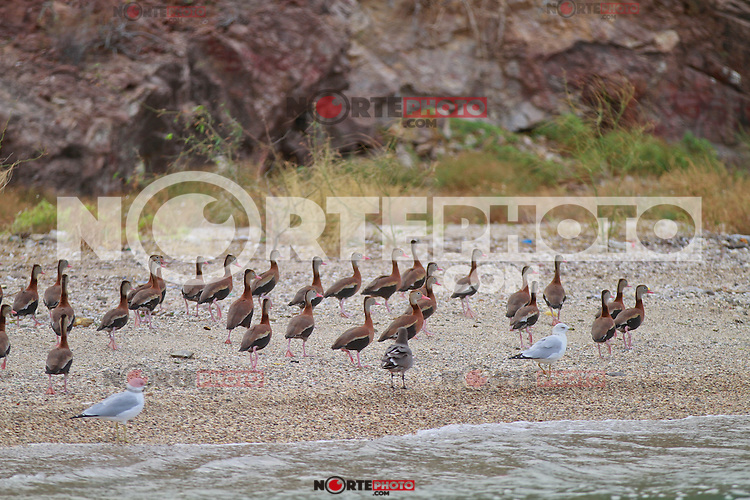 Report of the fishing port of Guaymas Sonora.<br />