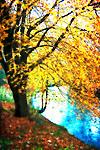 An autumn scene by a riverbank