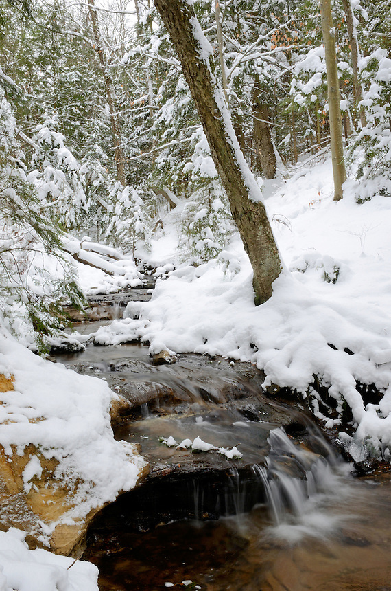 A small stream flows through a freshly coated forest. Munising, MI