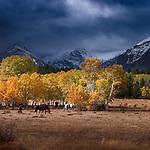 Horses in pasture, Lewis Range, Montana