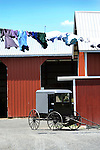 Amish buggy, clothesline  and barn.