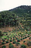 Espirito Santo, Brazil. Hillside coffee plantation on Atlantic Rainforest (Mata Atlantica) land with some forest remaining.