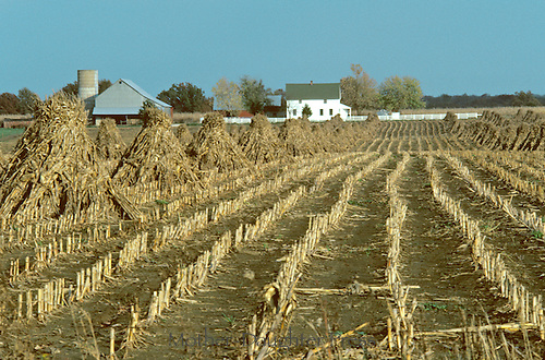 "Amish farm with field of harvested corn in ""shocks"" for storage,  Fall, Audrain County MO"