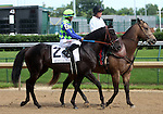 May 24, 2014 War Dancer, ridden by Alan Garcia,in the post parade of the G3 Louisville Handicap, which he won.  The winner was owned by Diamond M Stable and trained by Ken McPeek.  The race was run in 2:28.23, a new stakes record.