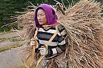 Carrying red rice after a day of harvest. (Paro, Bhutan)