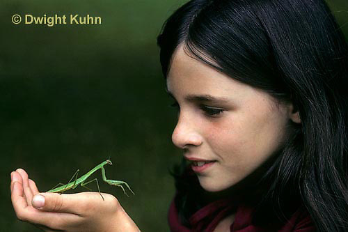 1M17-209z  Praying Mantis nymph being looked at by girl - Tenodera aridifolia sinenesis