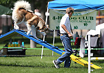 4-H member Tristin LaFever, of Reno, and his dog Tundra run the dog agility course at the Carson City Fair at Fuji Park on Tuesday, July 25, 2017. <br /> Photo by Cathleen Allison/Nevada Photo Source