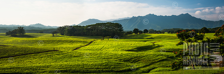 The lush property of Jurassic Kahili Ranch, Kilauea, Kaua'i.