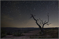 On a warm summer night, I trekked to the top of Enchanted Rock, one of my favorite state parks in the Texas Hill Country, and planned on shooting the Milky Way. While there, I noticed the Big Dipper to the northwest and couldn't resist capturing this iconic group of stars with this old tree in the foreground. I'm always amazed at the night sky when there is little light pollution. The glow in the distance is more from the recent sunset than city lights.